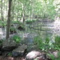 beautiful ny landcape in the woods in spring