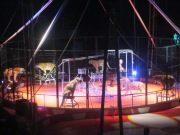 caged animal in the circus