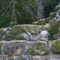 Where is the Lizard