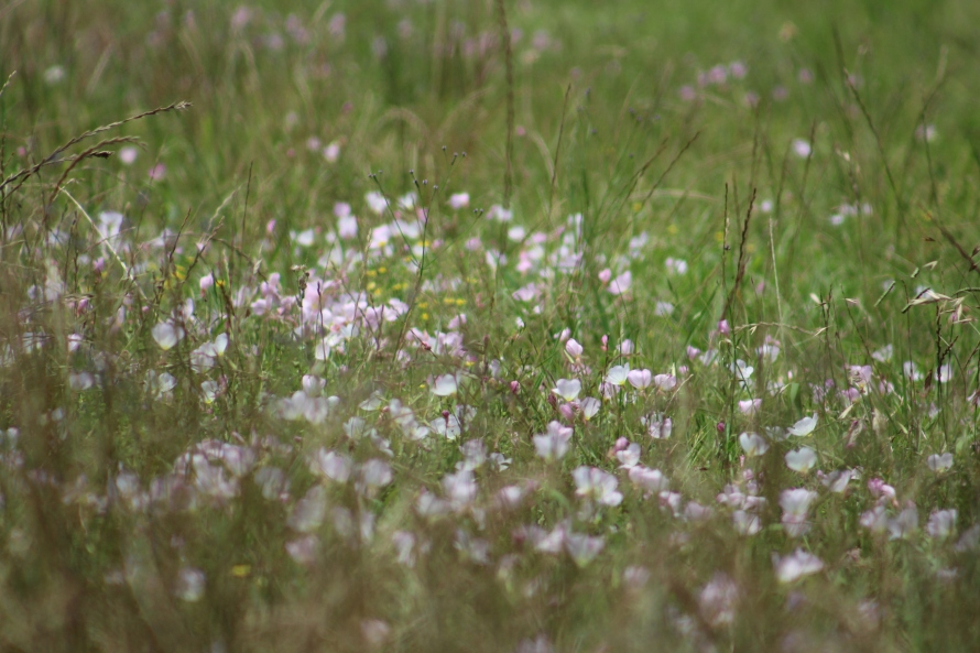 flowers in the field