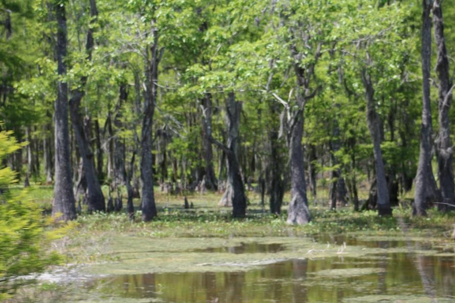 haunting swamp land