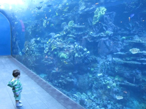 little boy in awe before the world of water