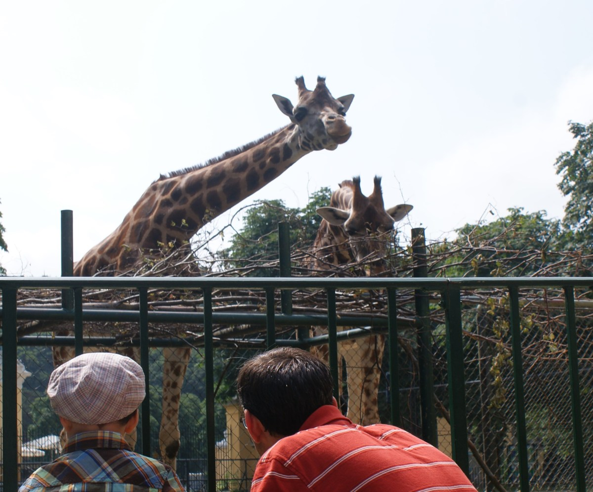Giraffe in Vienna