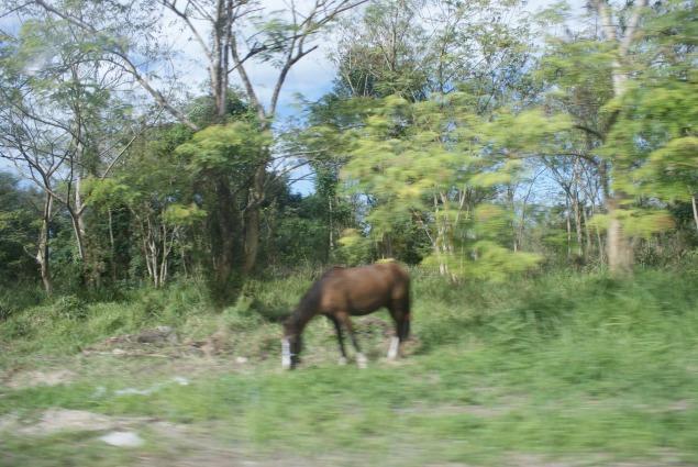 Blurry horse