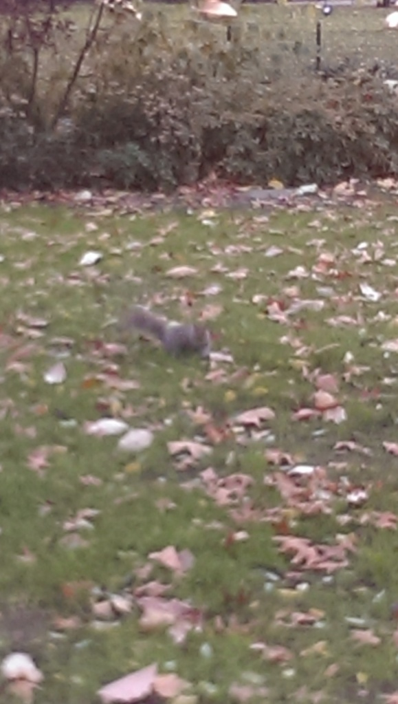 Squirrels are always the rock stars