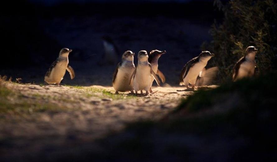 penguins at night